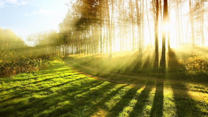 forest_sunshine-HD_Desktop_Wallpaper_1366x768